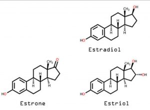 the oestrogens